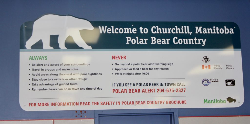 Welcome to churchill manitoba polar bear country