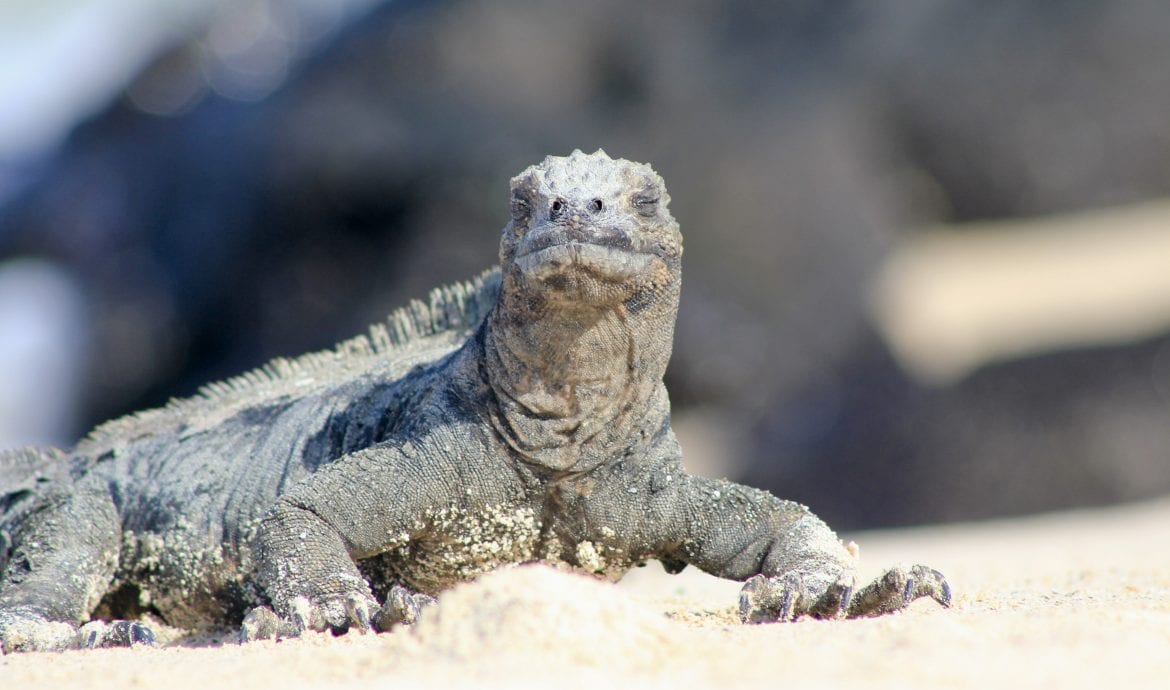 where do you fly into to visit the galapagos islands