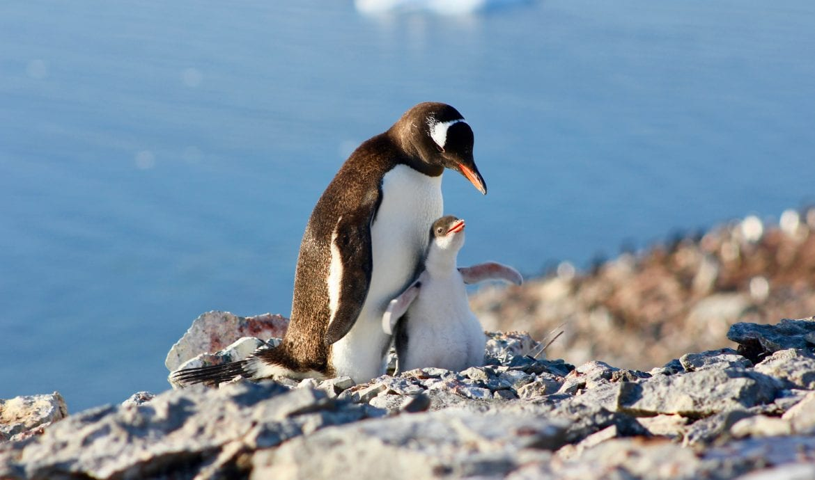 Expedition Penguin: Our Antarctic Journey