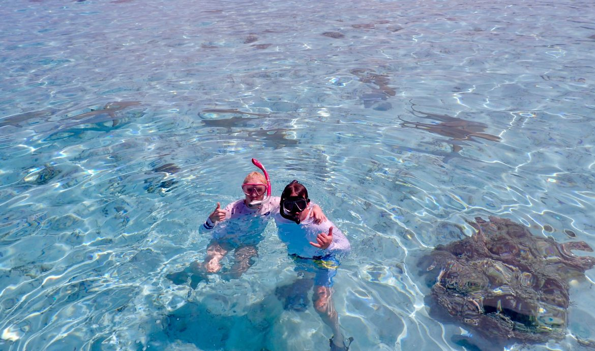 swim with sharks tahaa