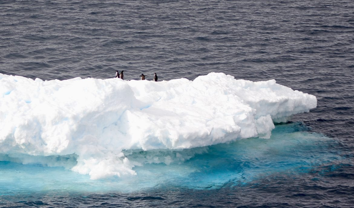 penguins on icebergs duse bay weddell sea