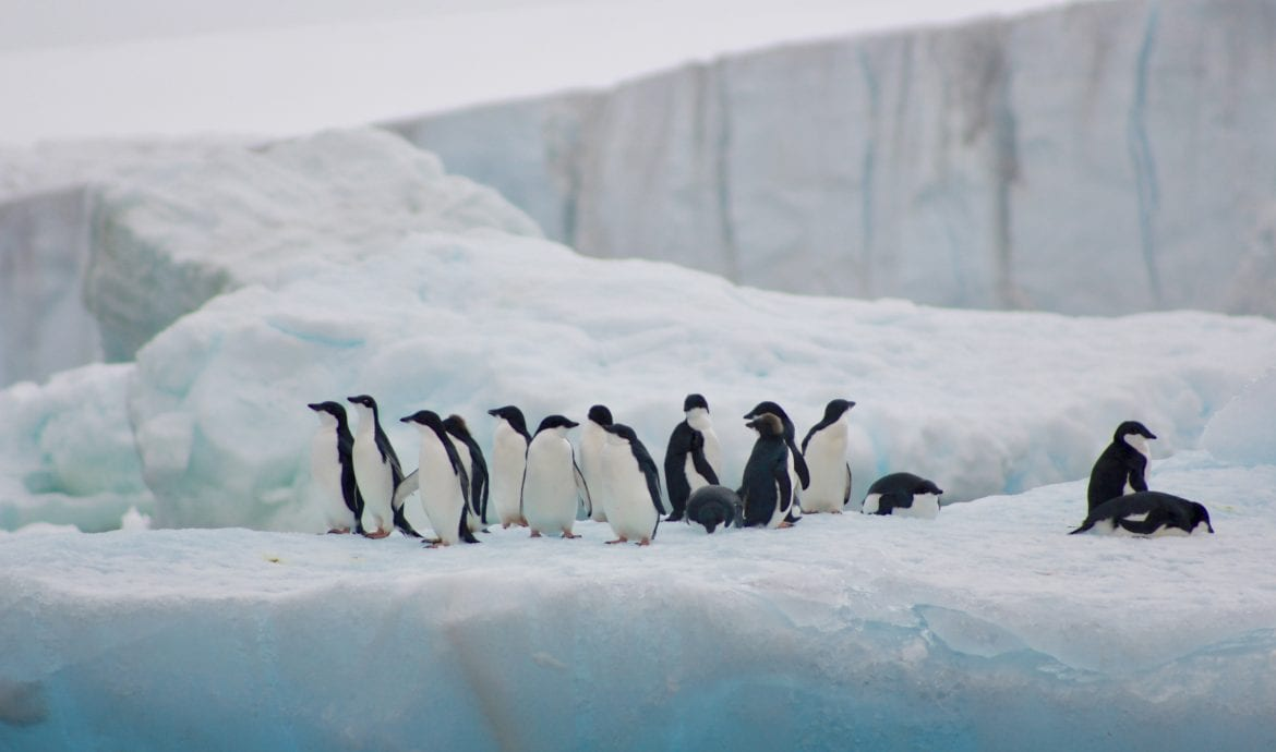 penguins on icebergs antarctica