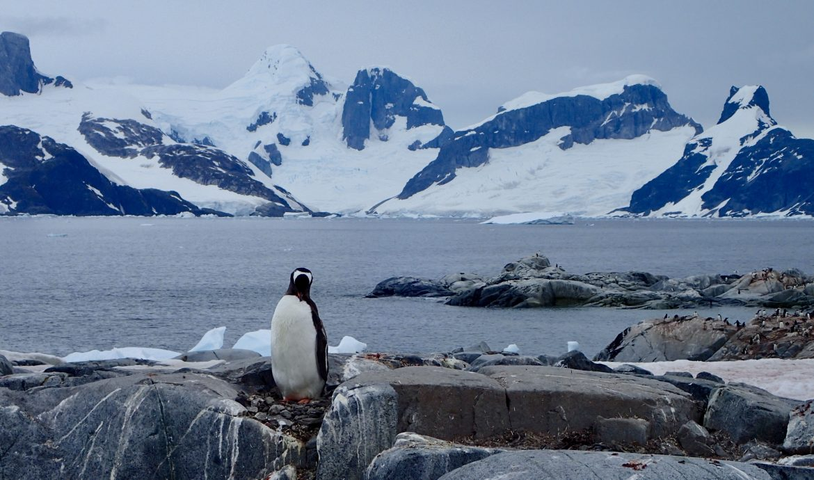 penguins on petermann island Antarctica