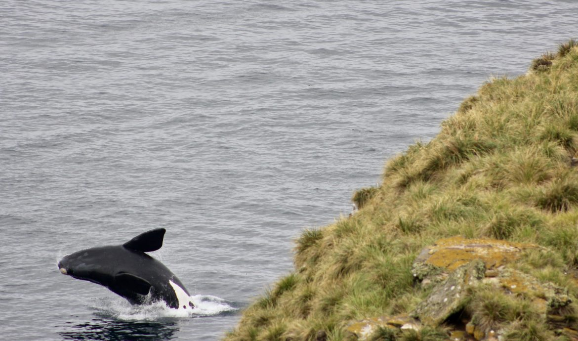 How to see Whales in falklands